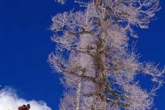 Lone Tree Pow Turn-color